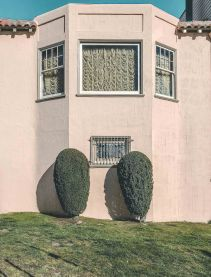 bushes1_v2.jpg