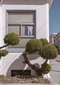 bushes 7.jpg